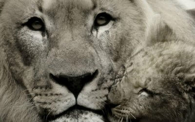 How to create fierce compassion for the world