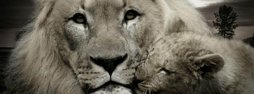 A lion and her cub